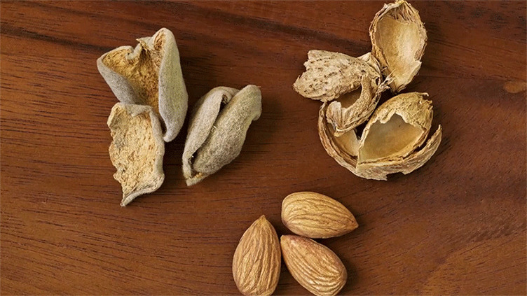 almond hulls shells and whole almonds
