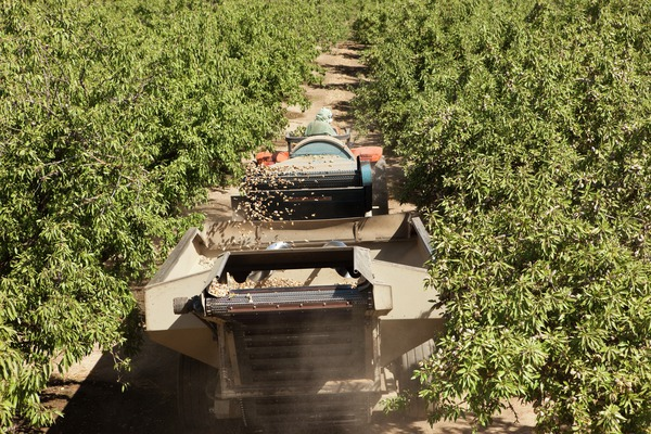 almond pick up machine
